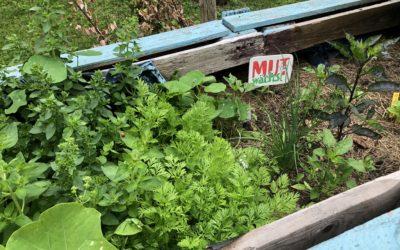 Mut wächst – Urban Gardening in Niendorf